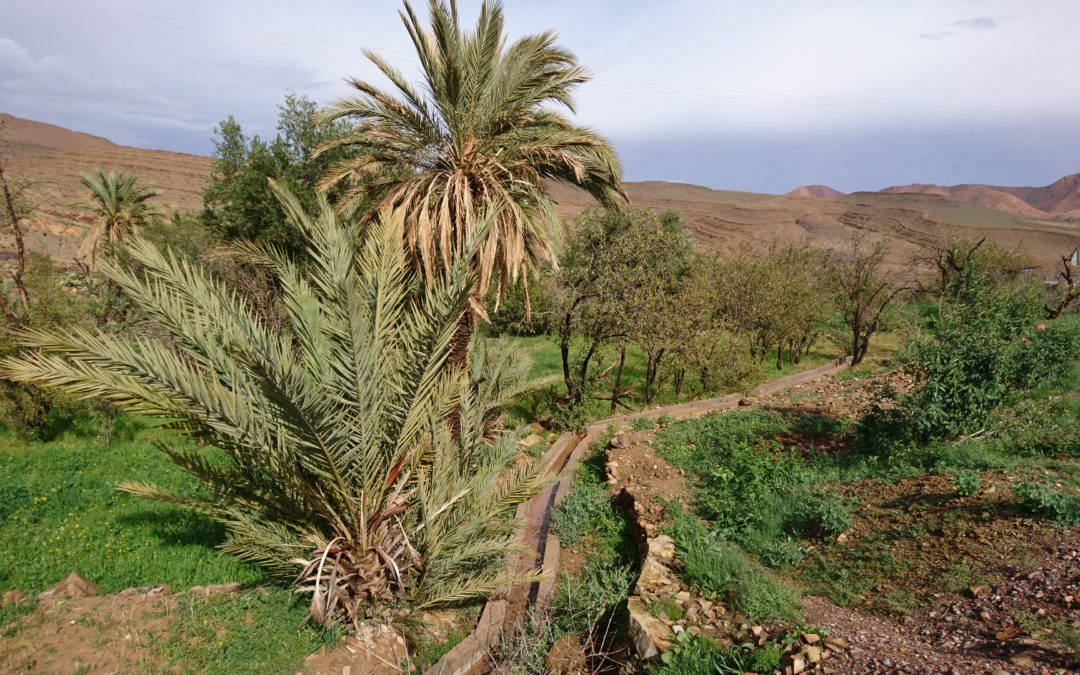 Southern Morocco: a great place to learn about the roots of happiness