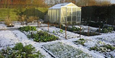 The Gardener's Way: seasonal tips for January/February