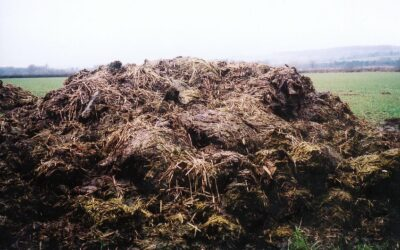 Why composting is a skill for our times